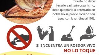 Información importante para prevenir el Hantavirus