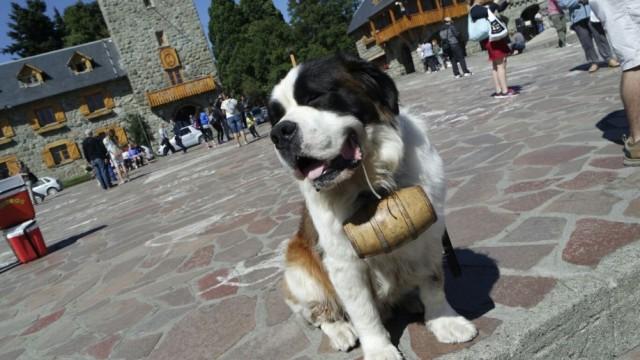 Defensoría acompaña iniciativa legislativa para desalentar la explotación de animales en actividad fotográfica