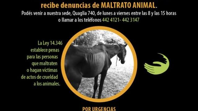 Recibimos denuncias por maltrato animal