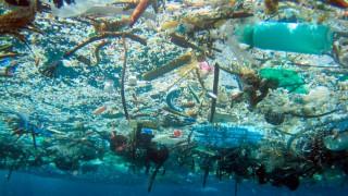 8 de Junio Día Mundial de los Océanos.